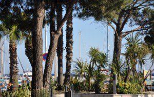 palmiers et conifères à port miramar
